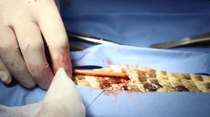 Chief-implant.jpg